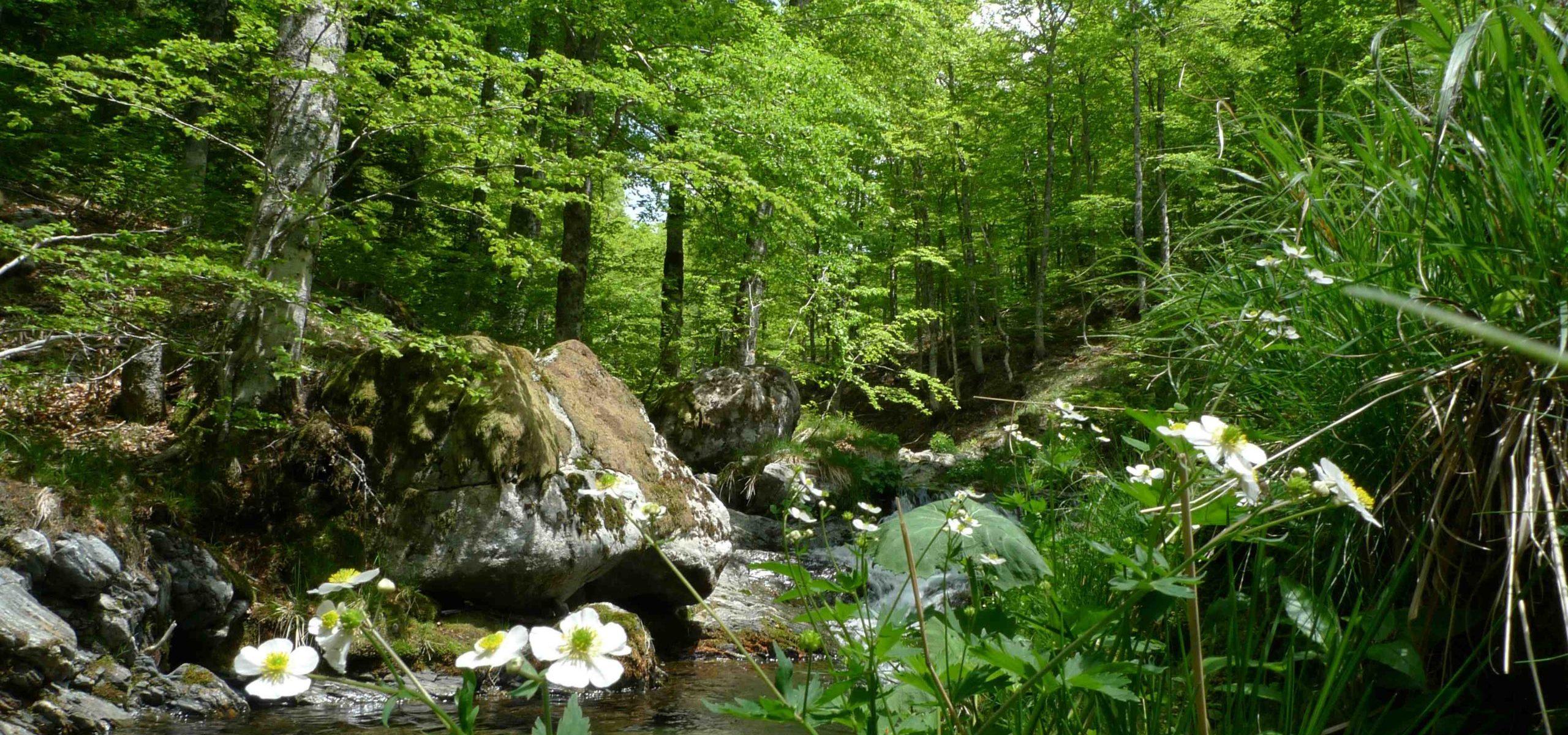 Energiequelle für Naturliebhaber, Familien und Aktivurlauber